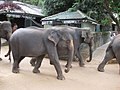 Pinnawala Elephant Orphanage (7568441348).jpg