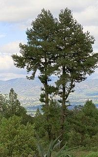 Tulancingo de Bravo - Wikipedia, la enciclopedia libre