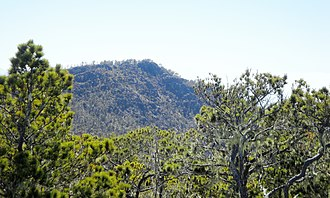 Pico Duarte - Hispaniolan Pine.