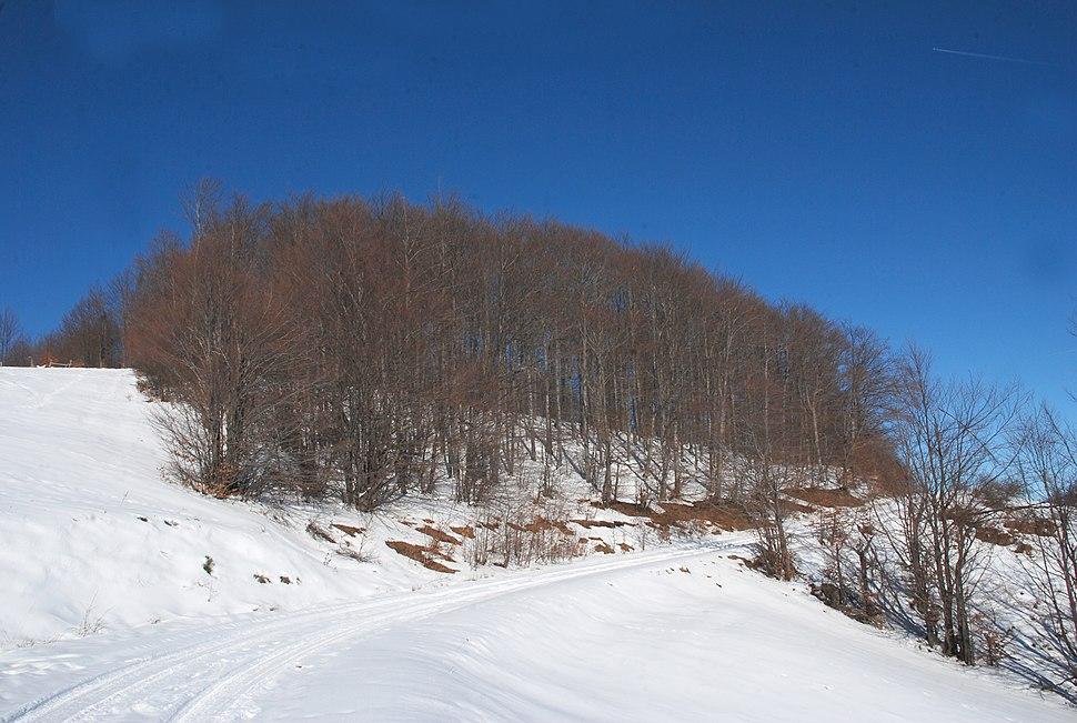 Planina Jablanik - Debelo brdo - Na putu ka selu Gornje Košlje 3