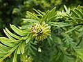 Plante du Jardin du Luxembourg 2.JPG