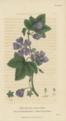 Plate 16 Malva Sylvestris - Conversations on Botany-1st edition.tiff
