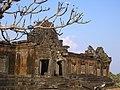 Plumeria sp. Au vat Phou (Laos) les vieux frangipanier s'accordent magnifiquement avec les temples en ruine.jpg