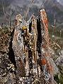 Pointe de Fresse - flat stone.jpg