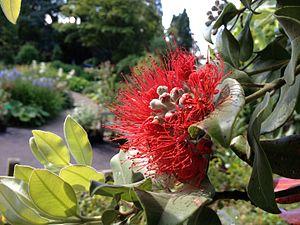 University of Bristol Botanic Garden - Image: Pollination display, Bristol Botanic Garden