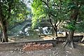 Pond - Ramakrishna Mission Ashrama - Sargachi - Murshidabad 2014-11-11 8854.JPG