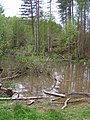 Pond in the Great Wood - geograph.org.uk - 167039.jpg