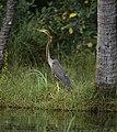 Poovar Island, Kerala, India 20140107-DSC 3275.jpg