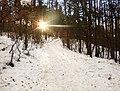 Praha, Kunratice, Kunratický les, zimní slunce.jpg