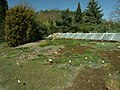 Praha, Troja, Botanická zahrada, květiny,.JPG