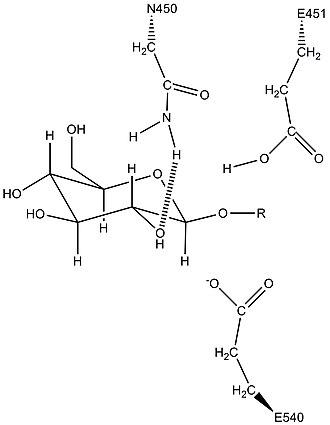 Beta-glucuronidase - Image: Predicted Asn 450 activity in beta glucuronidase