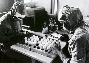 MMR vaccine - Two workers make openings in chicken eggs in preparation for a measles vaccine