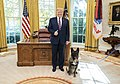 President Trump Welcomes Conan the Military Working Dog to the White House (49124094968).jpg