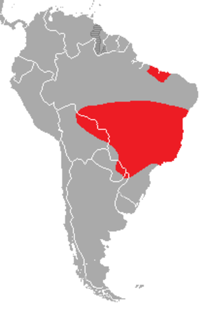 Blue-winged macaw - Image: Primolius maracana distribution map