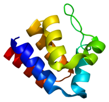 Protein PYCARD PDB 1ucp.png