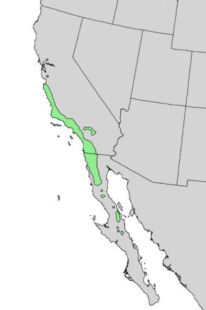 Prunus ilicifolia - Image: Prunus ilicifolia range map 3