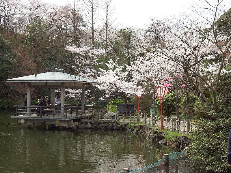 File:Prunus sp in Takaoka Kojo Park 09.jpg