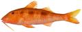 Pseudupeneus maculatus - pone.0010676.g098.png