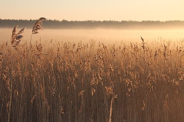 Ptasi raj,świt nad jeziorem( widok od strony rzeki ).jpg