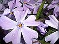 Purple - by Janine Dupree.jpg