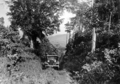 Queensland State Archives 1276 Scene on the road to Lake Eacham near Yungaburra c 1935.png