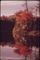 RED MAPLE REFLECTED OFF A POINT ON TWITCHELL LAKE IN THE ADIRONDACK FOREST PRESERVE - NARA - 554751.tif