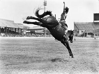 Australian rodeo - Beryl Riley riding a buckjumper at the Sydney Royal Easter Show.