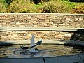 Radcliffe Yard fountain - Harvard University - DSC06475.JPG