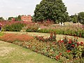 Rainbow flower beds, Kew Gardens - geograph.org.uk - 215060.jpg