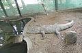 RajivGandhi Zoological Park (20).jpg