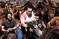 Rapa Das Bestas 2010 en el Curro de Sabucedo 13.jpg