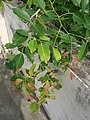 Red Sandal - New Shoots Pink Colour-1.jpg