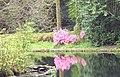 Reflections at Trevarno - geograph.org.uk - 334556.jpg