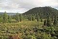 Reforestation Southern Oregon.jpg