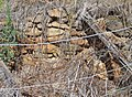 Remains of stone-lined well, West Toodyay, Western Australia. 2015.jpg