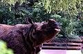 Rhinoceros unicornis.jpg