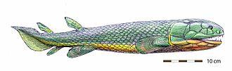 Rhizodontida - Restoration of Rhizodopsis