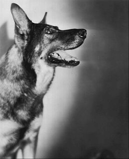 Rin Tin Tin Famous German Shepherd dog