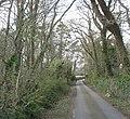Road through woodland leading to the modern Llangwenllwyfo Church - geograph.org.uk - 749365.jpg