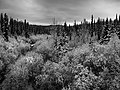 Rock Creek, Winter Snow Storm (6473145559).jpg