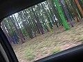România, copacii colorați.jpg