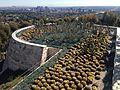 Rooftop cactus garden (16427658080).jpg