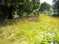Royal Cemetery Sweden 2009 Solna (3).jpg