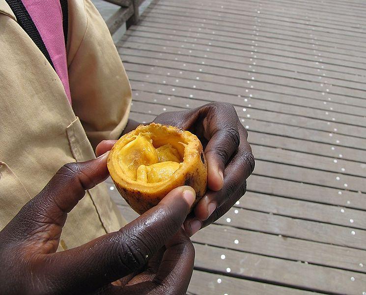 File:Saba senegalensis - fruit, madd.jpg