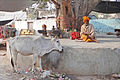 Sadhu sous un arbre (Orchha) (8451605530).jpg