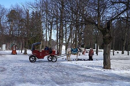 Parc du  Palais de Pavlovsk.-  Saint-Pétersbourg