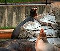 Saint Louis Zoo 045.jpg