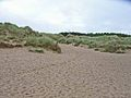 Sand dunes at Newborough Beach - geograph.org.uk - 226520.jpg