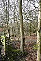 Sandleford Woods - geograph.org.uk - 1187311.jpg