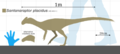 Santanaraptor placidus size chart.png